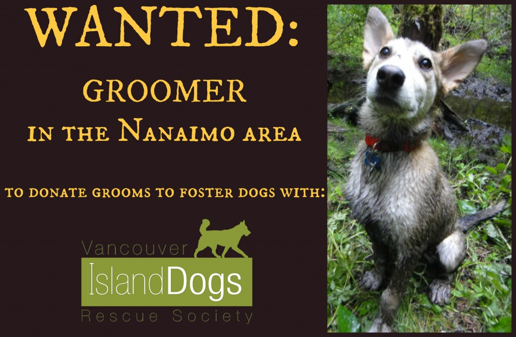 Nanaimo Groomer wanted!